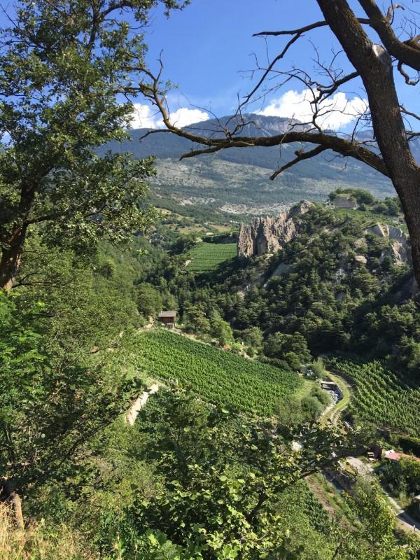 sentier-viticole-62-6709888